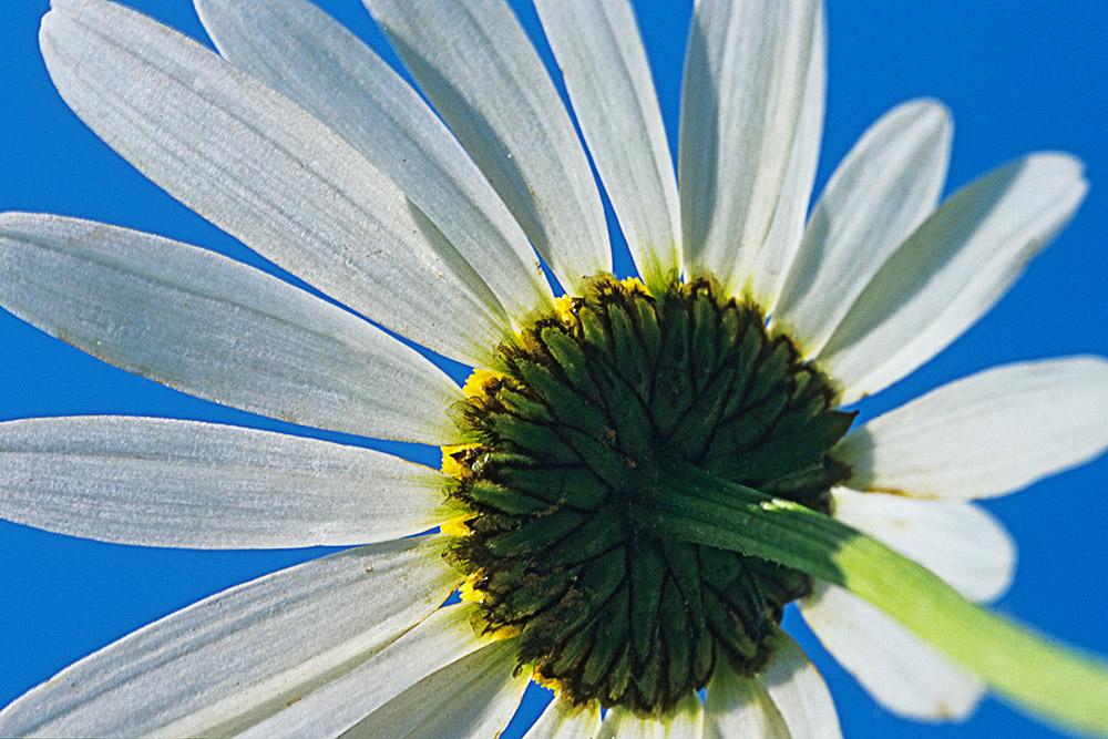 Flora 02-06046