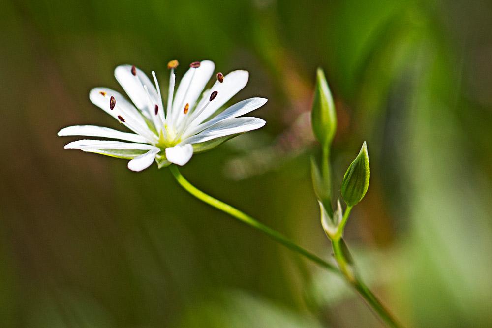 Flora 02-06312