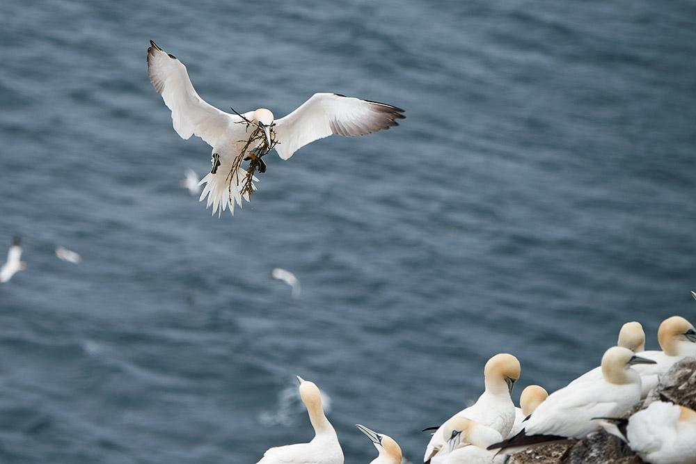 Fåglar 01-10090