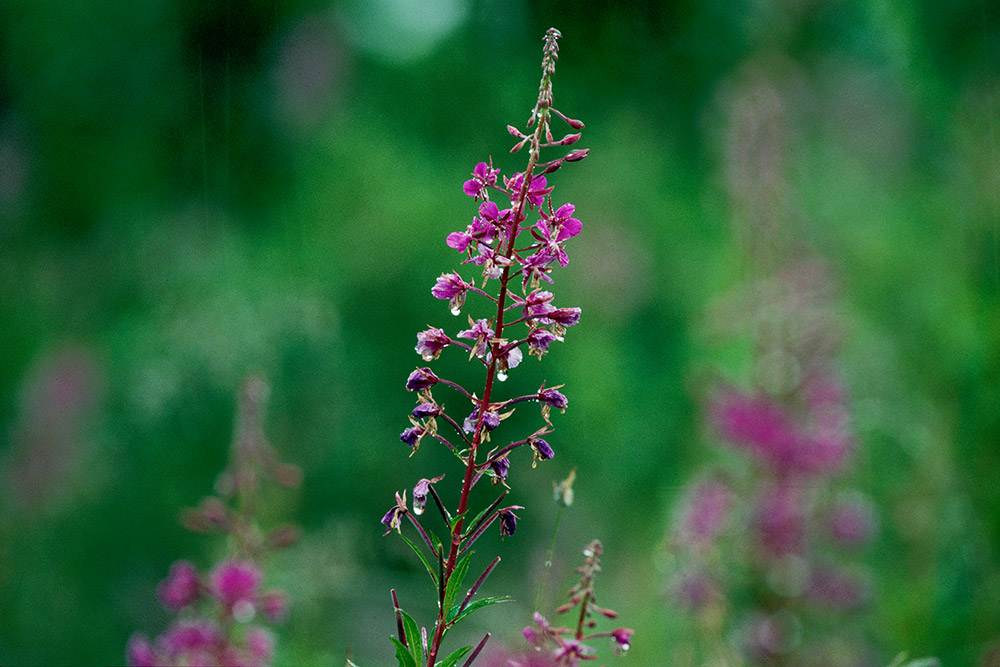 Växter 02-06142